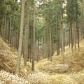 Photos: 妖精の森