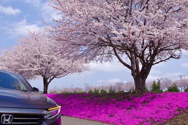 Photos: お花見ドライブ