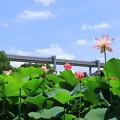 Photos: モノレールと大賀ハス
