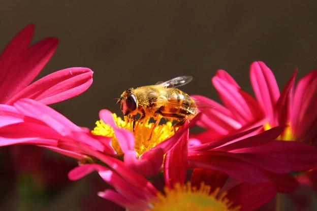 ミツバチ02