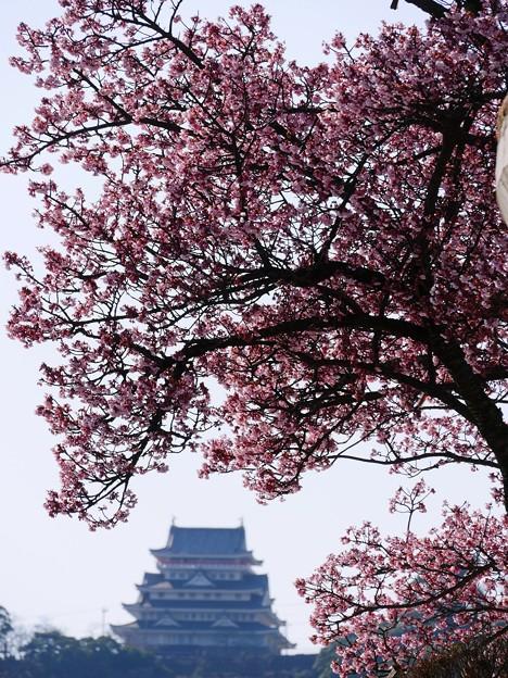 あたみ桜と熱海城