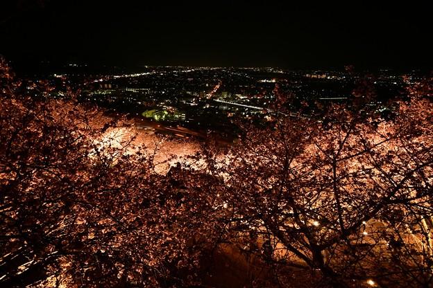 松田山・夜景・夜桜