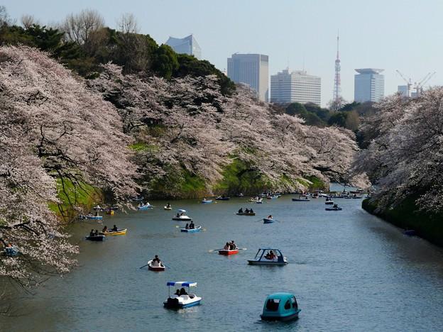 東京・千鳥ヶ淵・桜