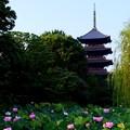 写真: 京都・東寺・蓮