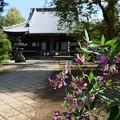 写真: 咲き始めの萩