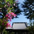 写真: 寛永寺・萩