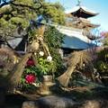 上野東照宮・ぼたん園・五重塔
