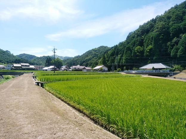 Photos: 田舎