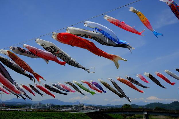 鯉のぼりIMG_1258