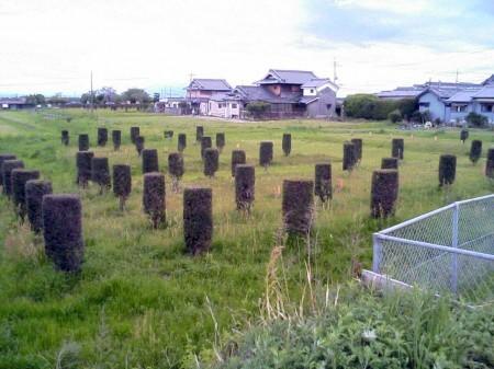 2007_05_01_カズの奈良ひとり旅_07_平城宮跡?
