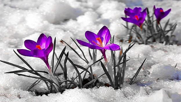 Photos: Floral Magic in Spring(10025)