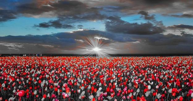 Photos: Floral Magic in Spring(10026)