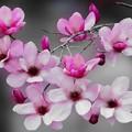 Photos: Floral Magic in Spring(10030)