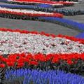 Photos: Floral Magic in Spring(10033)