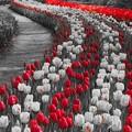 Photos: Floral Magic in Spring(10034)