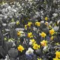 Photos: Floral Magic in Spring(10038)