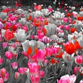 Photos: Floral Magic in Spring(10039)