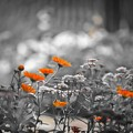 Photos: Floral Magic in Spring(10040)