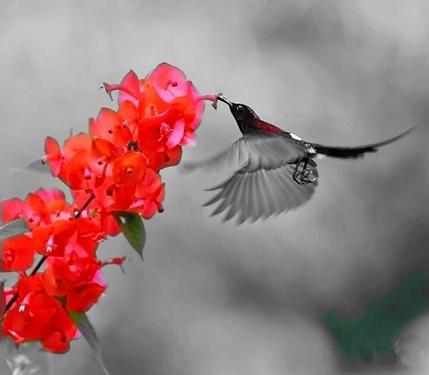 Photos: Floral Magic in Spring(10042)