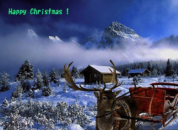Photos: Merry Christmas(1)