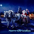 Photos: Merry Christmas(4)