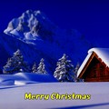 Photos: Merry Christmas(8)