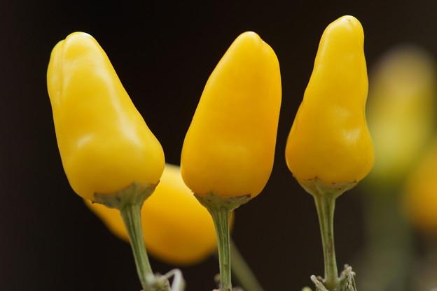 黄色いピーマン