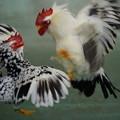 写真: 二羽の鳥