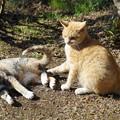 写真: 猫二匹