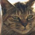 写真: 野良猫