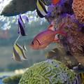 写真: 沖縄美ら海水族館