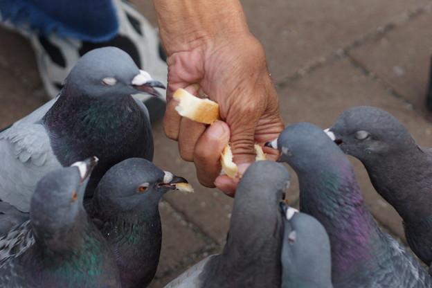 パン食う鳩