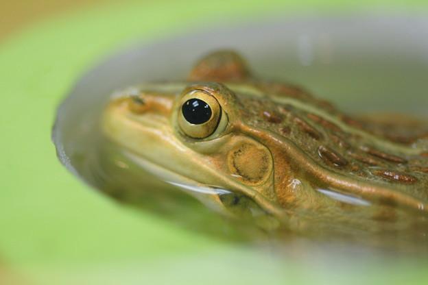 Photos: 蛙