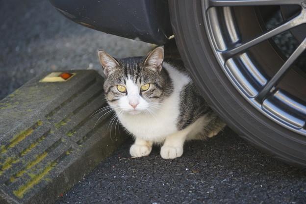 写真: 危ない猫