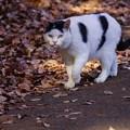 写真: 散歩猫