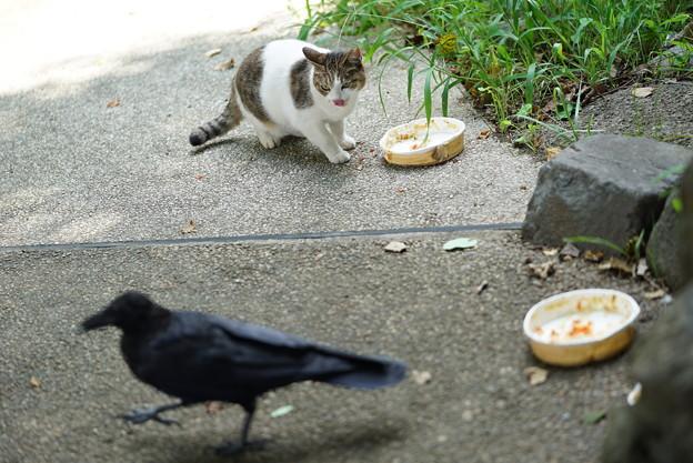 写真: 気弱な猫