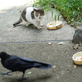 Photos: 気弱な猫