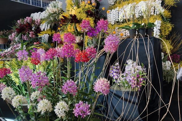 らんの花々