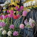 写真: らんの花々