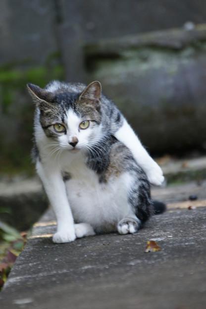 写真: 猫