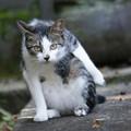 照片: 猫