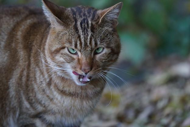 威嚇する猫