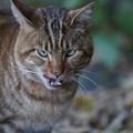 写真: 威嚇する猫