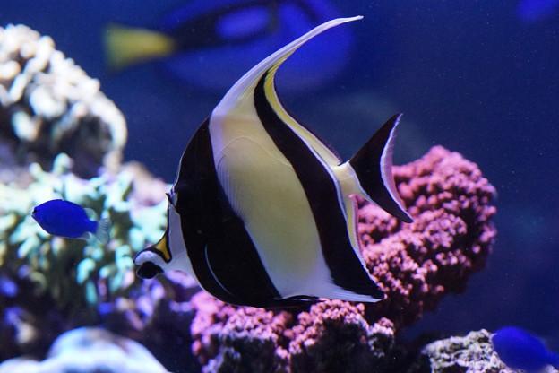 水槽の熱帯魚