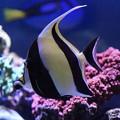 写真: 水槽の熱帯魚