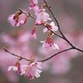写真: 春色