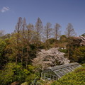 春の植物園