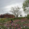 写真: 春の赤レンガ倉庫