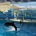 写真: 飛ぶイルカと人