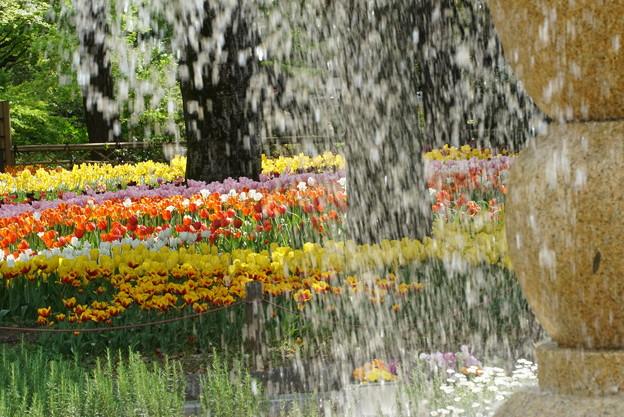 噴水とチューリップ